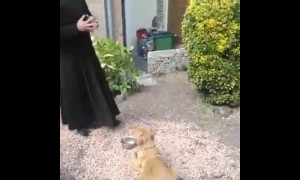 Dog prays before a meal
