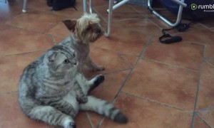 Dog and cat hilariously watch TV together like humans
