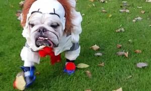 Spooky Doggos Walk through All Saint's Park