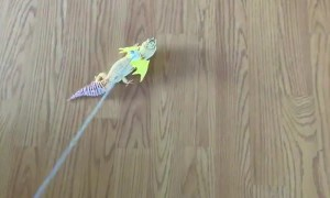Gecko Dresses Up as Dragon