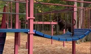 Dog Scoots Down Swirly Slide