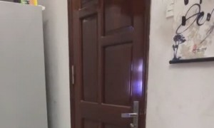 Clever Cat Opens the Door