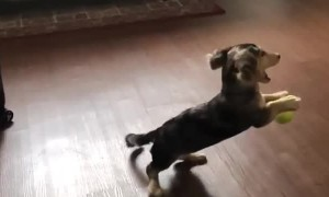 Slow motion captures puppy's attempt at playing catch