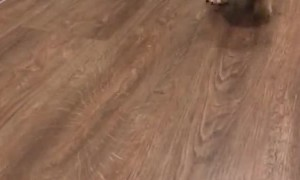 Puppy Outruns Its Own Legs