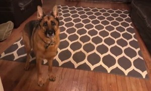 Dog loses it after being told she's going to favorite coffee shop
