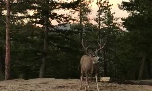 Curious Deer Come in Close
