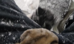 Husky Puppy Rescued by Kind Man