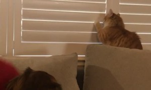Cat Shows Dominance Over Dad