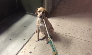 Dog isn't happy that favorite pet store is closed, refuses to leave