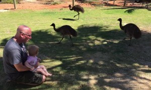 Dad and Daughter Visited by Emu Family