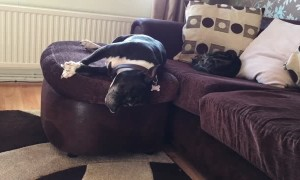 Dreaming dog hilariously falls off couch
