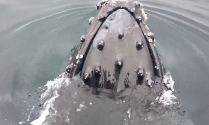 Amazing Whale Encounters​