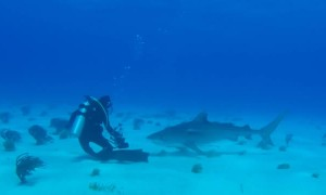 2019's Most Amazing Shark Encounters Caught on Camera