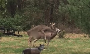 Deer Confused by Broken Doe