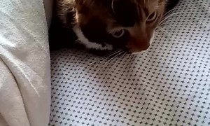 Cat Hides Under Covers from Company