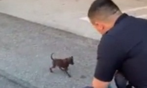 Officers find abandoned puppy, make him part of LAPD