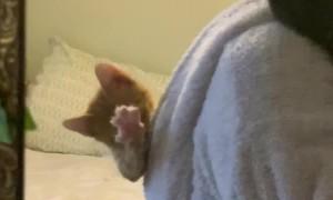 Kitten Hangs Out in Hood