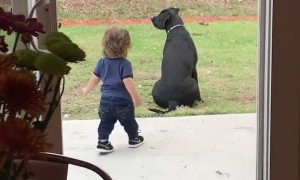 Mom catches toddler adorably walking out just to give dog a big hug