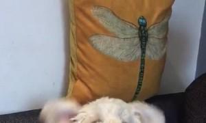 Adorable Doggo with Floppy Ears