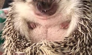 Hedgehog Has a Snack