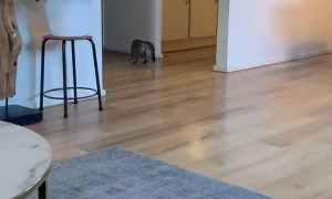 Feline Falls on Slippery Floor