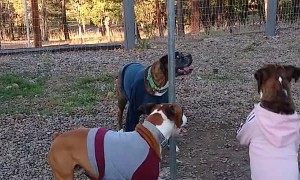 Doggos Dispute Outcome of Tether Ball Game
