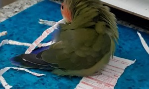 Parrot Paper Shredder