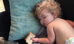 Dog cautiously steals sandwich from sleeping toddler
