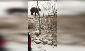 Bear Shuts Itself Inside SUV