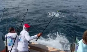 Sailfish Slams into Fisherman