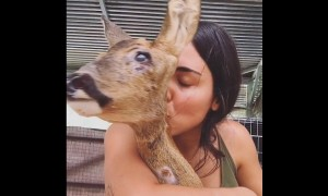 Rescued deer recovers from devastating injuries
