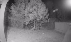 Bear Bites Security Camera