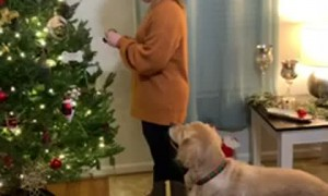 Doggo Helps Decorate