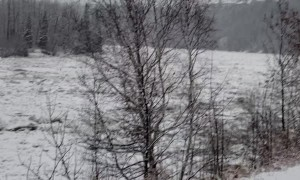 Pack of Coyotes on Moving Ice