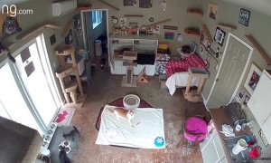 Cat Discovers the Security Camera