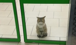 Cat Waits Patiently in Store Doorway
