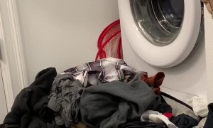 Kitty Brings Laundry Pile to Life