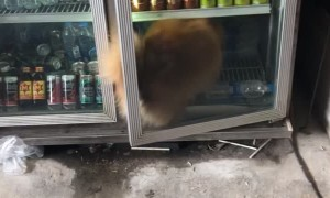 Smart Dog Keeping Cool