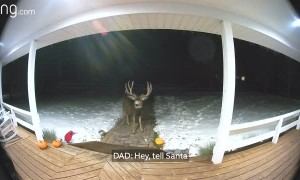 Father and Daughters Sweet Conversation with Reindeer