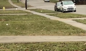 Cow Charges Towards People in Rockford