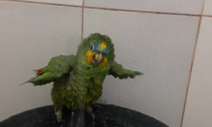 Adorable Bird Takes a Shower