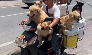 Scooter Carries K9 Passengers