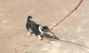 Doggo Takes Horse for a Walk