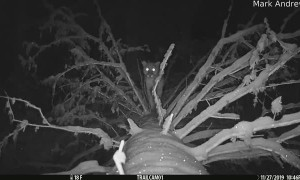 Trail Camera Catches Mountain Lion