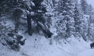 Bison Uses Snowy Hill as a Slide