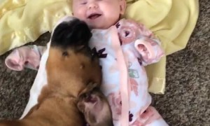 Boxer Snuggles with Baby