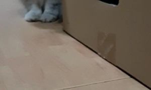 Outstretched Paws Give Cat Pause