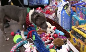 Shelter Animals Preciously Pick Out Toys From Under the Christmas Tree