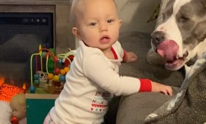 Sweet, gentle dog makes baby laugh
