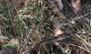 Campers Help Overheated Koala